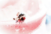 Antennae Digital Art - Ladybirds II by Mandy Tabatt