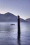 Seagull Photos - Lake Maggiore by Joana Kruse