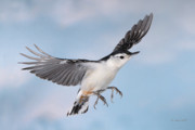 Backyard Birds Prints - Landing Gear Down Print by Gerry Sibell
