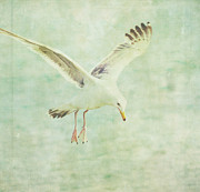 Flying Seagull Art - Landing by Rebecca Cozart