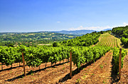 Vine Grapes Photos - Landscape with vineyard by Elena Elisseeva
