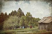 Barn Art - Laundry drying on clothesline on a summer day by Sandra Cunningham