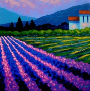Colourful Prints Art - Lavender Field France by John  Nolan