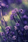Card For Photographer Prints - Lavender Garden III Print by Jayne Logan Intveld