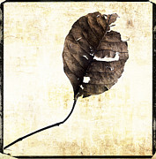 Out Digital Art Posters - Leaf Poster by Bernard Jaubert