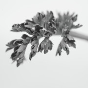 Wintry Photo Posters - Leaf Poster by Gabriela Insuratelu