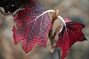Leaves Print by Amanda Barcon
