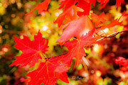 Fall Photography Posters - Leaves Poster by La Rae  Roberts