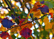 Autumn Leaves Metal Prints - Leaves of Autumn Metal Print by Stephen Anderson
