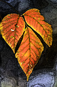 Fall Framed Prints Prints Prints - Leaves on a Branch Print by Paul Pobiak