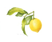 Kitchen Watercolor Paintings - Lemon by Fran Henig