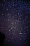 Shooting Star Prints - Leonid Meteors Print by Dr Fred Espenak