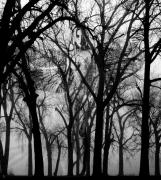 Trees - Leta by Ken Walker