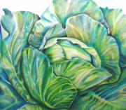 Lettuce Drawings Framed Prints - Lettuce Framed Print by Cami Rodriguez