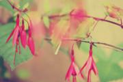 Lightly Pink Print by Kerry Langel