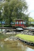Manicured Prints - Liliuokalani Gardens Print by Peter French - Printscapes