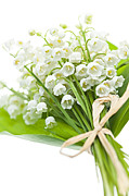 Lots Of Leaves Prints - Lily-of-the-valley bouquet Print by Elena Elisseeva