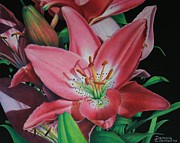 Blooming Drawings Prints - Lilys Garden Print by Pamela Clements