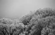 After Snowstorm Prints - Limbic Snow Print by Daamon Turne