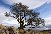 Hawthorn Prints - Limestone Pavement, Yorkshire Print by Bob Gibbons