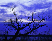 Lone Tree Blues Print by Terril Heilman