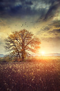 Omnimous Posters - Lone tree in autumn farm field  Poster by Sandra Cunningham