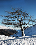 Winter Landscape Photos - Lone Tree by Linde Townsend