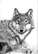 Pack Animal Drawings Posters - Lone Wolf Poster by Gail Schmiedlin