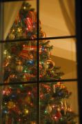 Special Occasion Photos - Looking At Indoor Christmas Tree by Carson Ganci