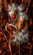 Milkweed Photos - Lord of the Dance II by Steve Harrington