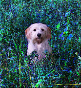 Puppy Digital Art Originals - Lost in the Paint by Brandy Nicole Clark