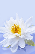 Water Lilies Photo Posters - Lotus flower Poster by Elena Elisseeva