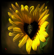Sunflower Paintings - Love Sunflower by Adam Vance