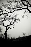 Bare Trees Posters - Low Angle View Of Eerie Tree Silhouettes Poster by Helene Cyr