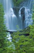 Cascade Mountains Posters - Lower Proxy Falls Poster by Greg Vaughn - Printscapes