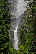 Lynn Bauer Photography Posters - Lower Yosemite Falls Poster by Lynn Bauer