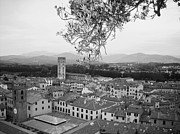 Lucca Framed Prints - Lucca in black and white Framed Print by Winston Moran
