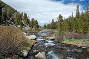 Owens River Art - Lundy Creek by Kirk Williams