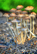 Magic Mushrooms Prints - Magic Mushrooms Print by Don Fleming