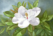 Magnolia Prints - Magnolia III Print by Leona Jones