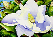 Janis Grau - Magnolia in Leaves