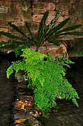 Textured Floral Framed Prints - Maidenhair Fern Framed Print by Kaye Menner