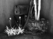 Jeff Holbrook Metal Prints - Mailbox and Cactus Metal Print by Jeff Holbrook