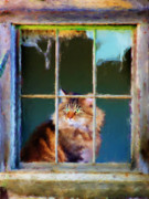 Left Behind Prints - Maine Coon Cat Print by Jai Johnson