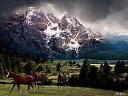 Horses Digital Art - Majestic by Bill Stephens