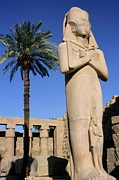 Majestic Statue Of Ramses II At Karnak Temple Print by Sami Sarkis