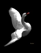 Ducks Digital Art Prints - Majestic Swan 3 Print by Dale   Ford