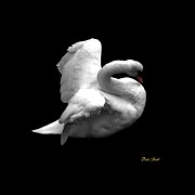 Ducks Digital Art Prints - Majestic Swan Print by Dale   Ford