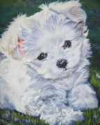 Puppy Paintings - Maltese by Lee Ann Shepard