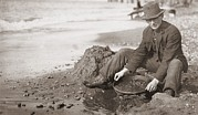 Precious Metals Prints - Man Panning Gold On Nome, Alaska, Beach Print by Everett